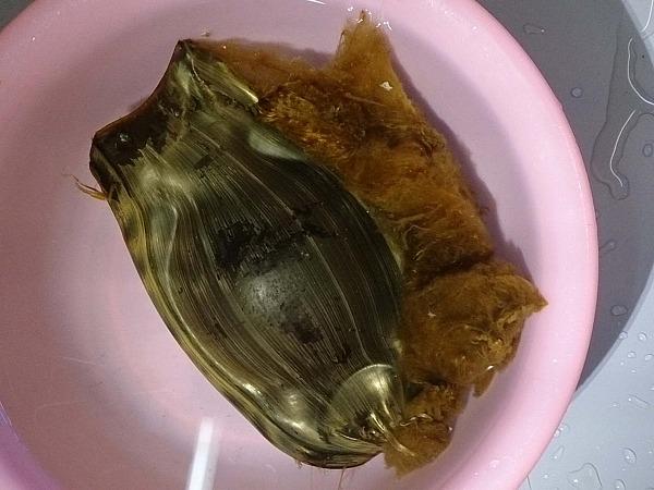 トラフザメの卵