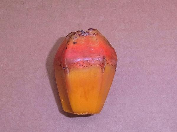 s-タコノキの果実3