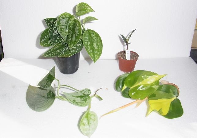S-0117その他の植物