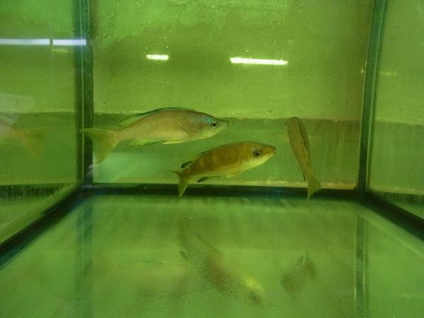 チェコ便の魚達を少しご紹介