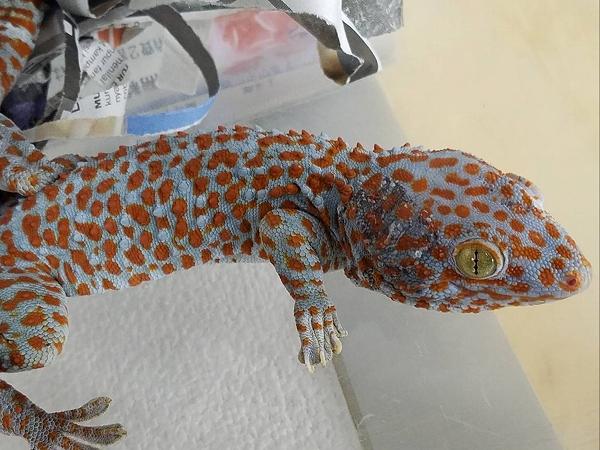 爬虫類最新入荷:インドネシア便①