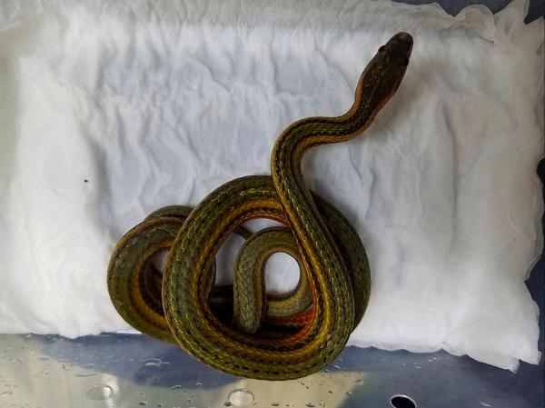 中国ヘビ2